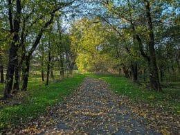 autumn mobile photography samsung galaxy s9 Plus bulgaria Varna