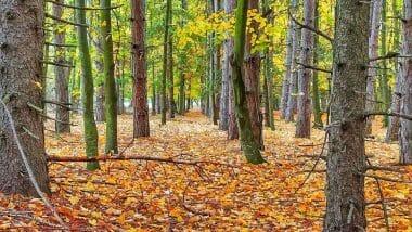 Златолистна есен - мобилна фотография, заснета от Пламен Доревски на 12.11.2020г. край Русе с Xiaomi Redmi Note 8 Pro.